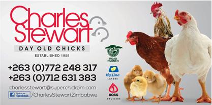 broiler Classifieds Zimbabwe | theDirectory co zw